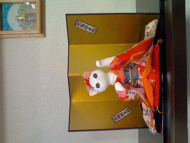 神戸『ゆめ猫』新作